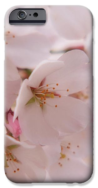 Delicate Spring Blooms iPhone Case by Angie Tirado