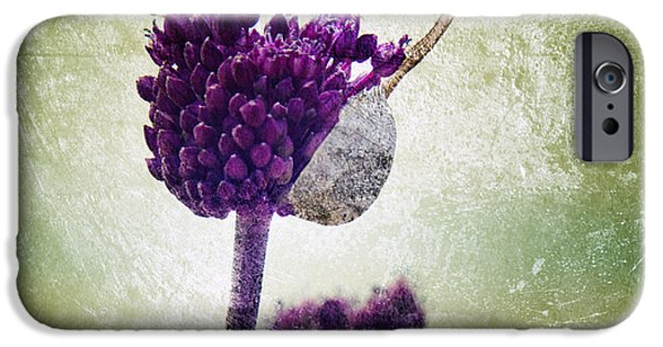 Alliums iPhone Cases - Delicate iPhone Case by Stylianos Kleanthous