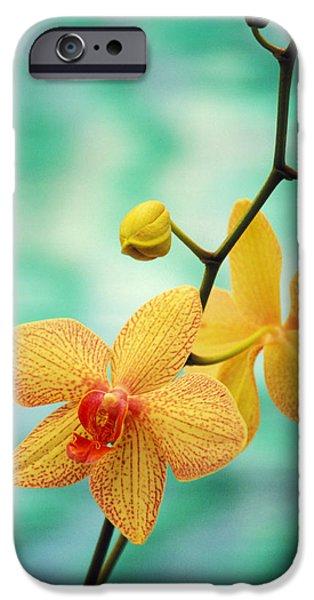 Best Sellers -  - Floral Photographs iPhone Cases - Dendrobium iPhone Case by Allan Seiden - Printscapes