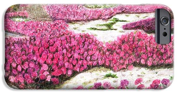 Flora Drawings iPhone Cases - Desert Flowers iPhone Case by Glenda Zuckerman