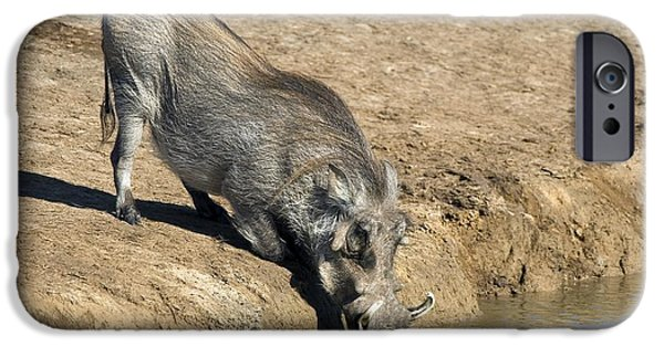 Addo iPhone Cases - Desert Warthog iPhone Case by Peter Chadwick
