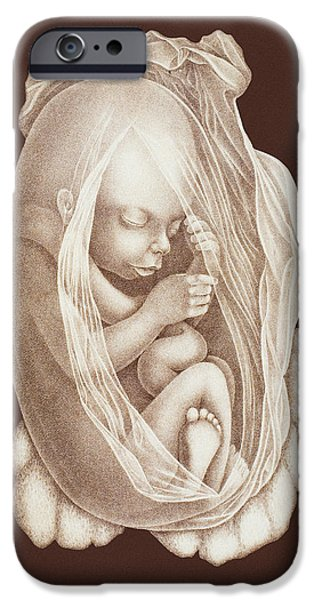 Development Of A Foetus In A Womb, 1891 iPhone Case by Mehau Kulyk
