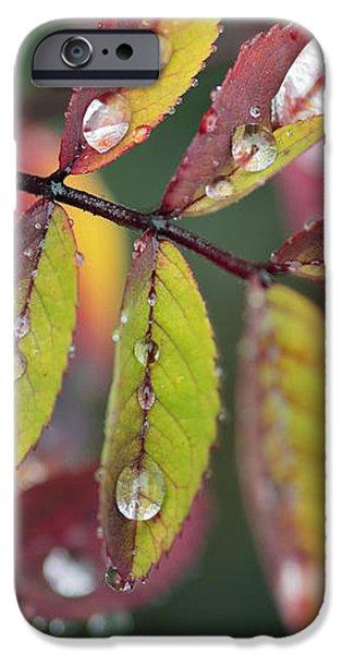 Dew On Wild Rose Leaves In Fall iPhone Case by Darwin Wiggett
