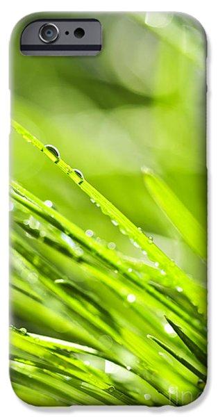 Dewy green grass  iPhone Case by Elena Elisseeva