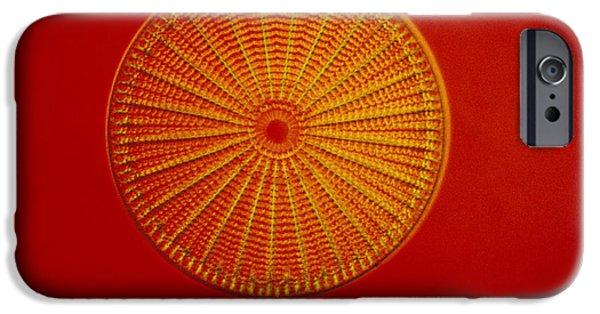 Diatom Photographs iPhone Cases - Diatom - Arachnoidiscus Ehrenbergi iPhone Case by Eric V. Grave