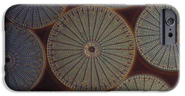 Diatoms iPhone Cases - Diatom - Arachnoidiscus iPhone Case by M. I. Walker
