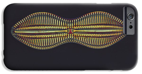 Diatom iPhone Cases - Diatom - Diploneis Crabro iPhone Case by Eric V. Grave