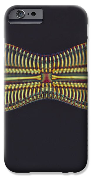 Diatom - Diploneis Crabro iPhone Case by Eric V. Grave