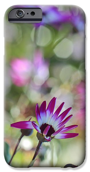 Senetti iPhone Cases - Different iPhone Case by Heidi Smith