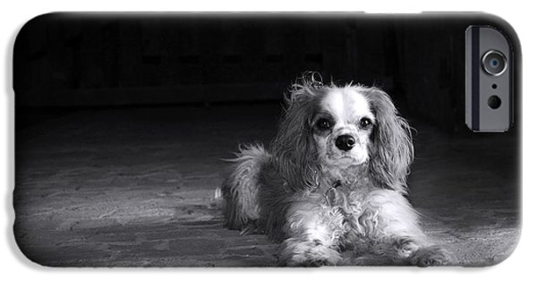 Adorable iPhone Cases - Dog black and white iPhone Case by Jane Rix