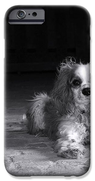 Dog black and white iPhone Case by Jane Rix
