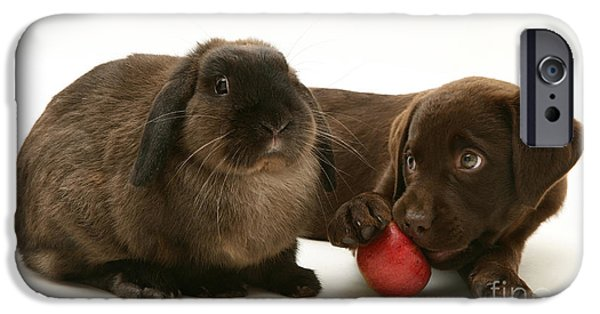 Chocolate Lab iPhone Cases - Dog Eating Apple With Rabbit iPhone Case by Jane Burton