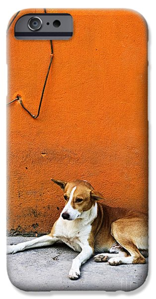 Stray iPhone Cases - Dog near colorful wall in Mexican village iPhone Case by Elena Elisseeva