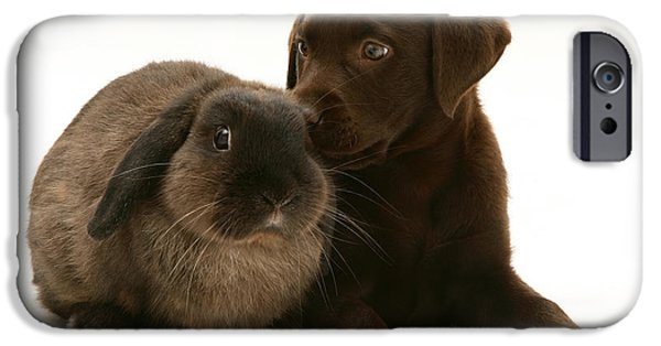 Chocolate Lab iPhone Cases - Dog Pup With Rabbit iPhone Case by Jane Burton