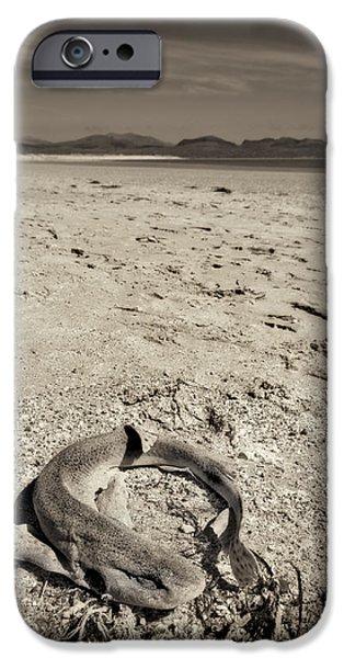 Shark iPhone Cases - dogfish at Newborough Beach iPhone Case by Meirion Matthias
