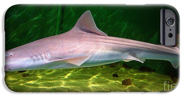 Shark iPhone Cases - Dogfish Shark In Aquarium iPhone Case by Matt Suess