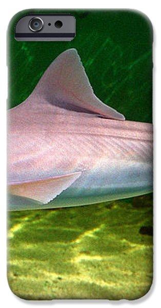dogfish shark in aquarium iPhone Case by Matt Suess