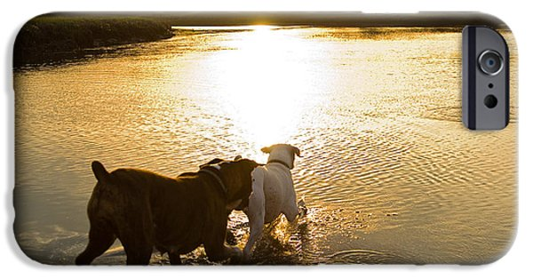 Boxer iPhone Cases - Dogs at Sunset iPhone Case by Stephanie McDowell