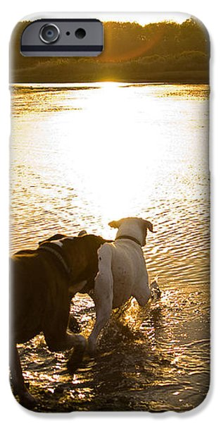 Dogs at Sunset iPhone Case by Stephanie McDowell