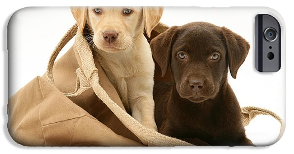 Recently Sold -  - Chocolate Lab iPhone Cases - Dogs In Cloth Bag iPhone Case by Jane Burton