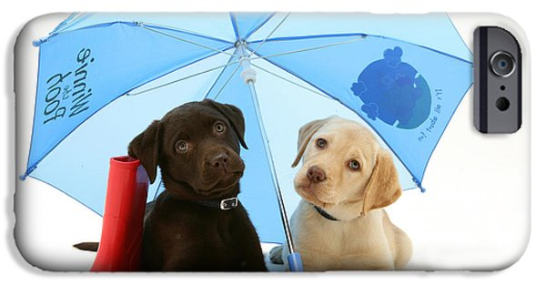 Chocolate Lab iPhone Cases - Dogs Under An Umbrella iPhone Case by Jane Burton