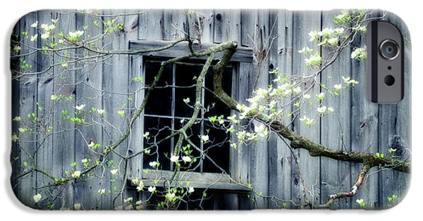 Nature Scene Photographs iPhone Cases - Dogwood Blossoms  iPhone Case by Thomas Schoeller