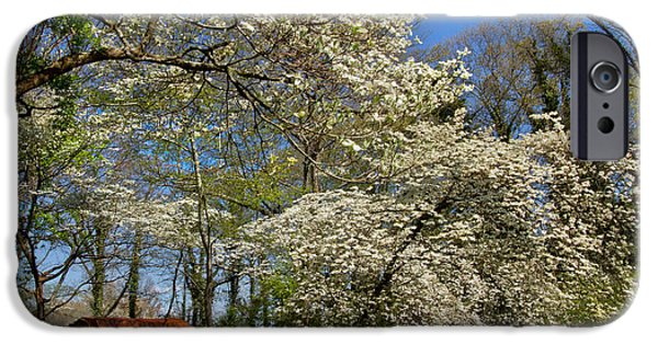 Barn Poster Photographs iPhone Cases - Dogwood Grove iPhone Case by Debra and Dave Vanderlaan