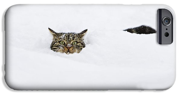 Shoulders iPhone Cases - Domestic Cat Felis Catus In Deep Snow iPhone Case by Konrad Wothe