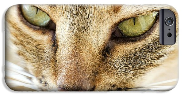 Felis iPhone Cases - Domestic Cat iPhone Case by Photostock-israel