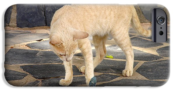 Felis iPhone Cases - Domestic Cat Playing With A Lizard iPhone Case by Bjorn Svensson