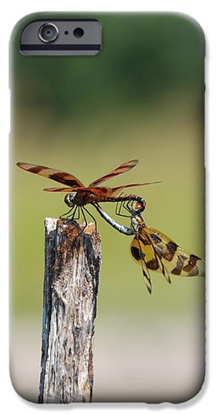Matting iPhone Cases - Dragon Fly Love iPhone Case by Kelly Rader