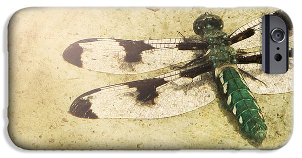 Dragonfly iPhone Cases - Dragon in the Sun iPhone Case by Amy Tyler
