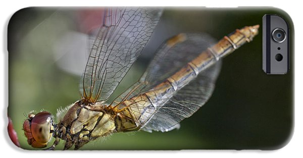 Biologic iPhone Cases - Dragonfly iPhone Case by Heiko Koehrer-Wagner