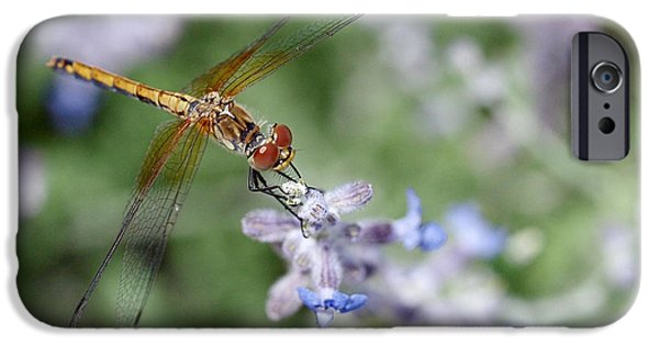 Dragonfly iPhone Cases - Dragonfly in the Lavender Garden iPhone Case by Rona Black