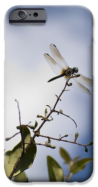 Dragonfly iPhone Cases - Dragonfly On A Limb iPhone Case by Dustin K Ryan