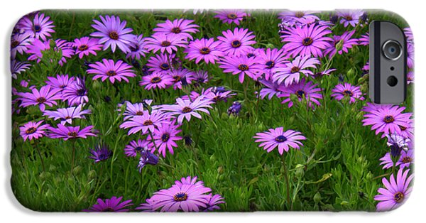 Florals iPhone Cases - Dreaming of Purple Daisies  iPhone Case by Carol Groenen