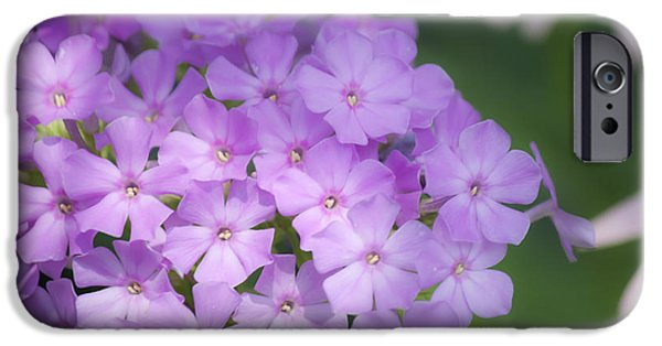 Phlox iPhone Cases - Dreamy Lavender Phlox iPhone Case by Teresa Mucha