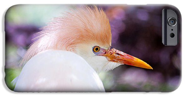 Cattle Egret iPhone Cases - Dressed for Mardi Gras iPhone Case by Kenneth Albin