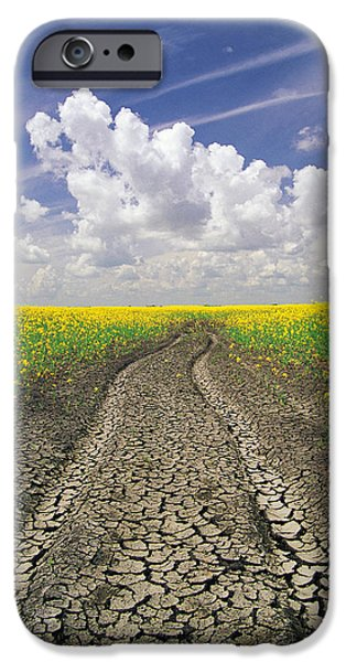 Canola Field iPhone Cases - Dried Up Machinery Tracks iPhone Case by Dave Reede