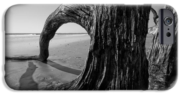 Old Trees iPhone Cases - Driftwood on the Beach iPhone Case by Dustin K Ryan