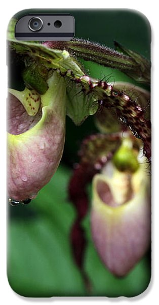 Drippy Lady Slipper Orchids iPhone Case by Sabrina L Ryan