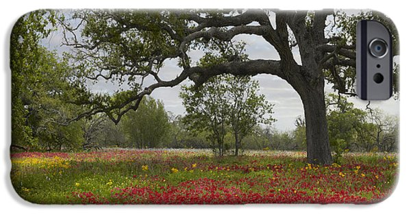 Animalsandearth iPhone Cases - Drummonds Phlox Meadow Near Leming Texas iPhone Case by Tim Fitzharris