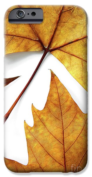 Winter Weather iPhone Cases - Dry Leafs iPhone Case by Carlos Caetano