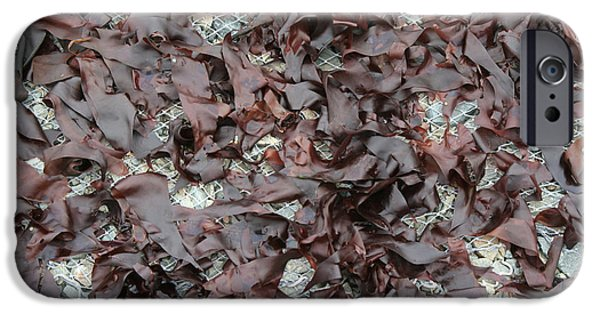 Aquatic Plants iPhone Cases - Drying Dulse iPhone Case by Ted Kinsman