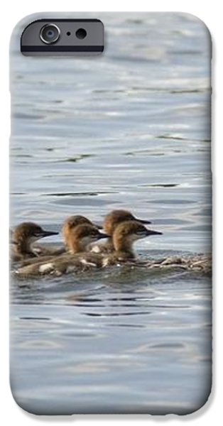 Duck And Ducklings Swimming In A Row iPhone Case by Keith Levit