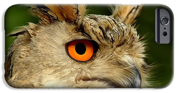 Wildlife Photographs iPhone Cases - Eagle Owl iPhone Case by Photodream Art