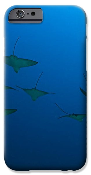 Eagle Rays in Ocean iPhone Case by Dave Fleetham - Printscapes