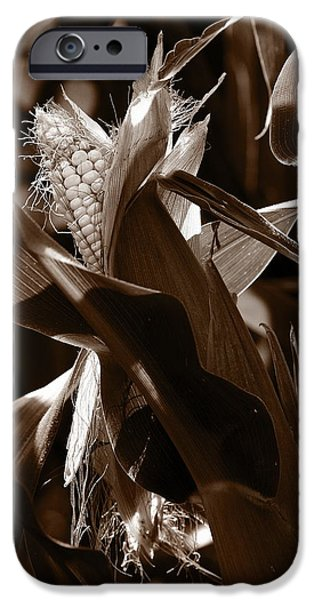 Sweet Corn Farm iPhone Cases - Ears To You Corn - Sepia iPhone Case by Angela Rath