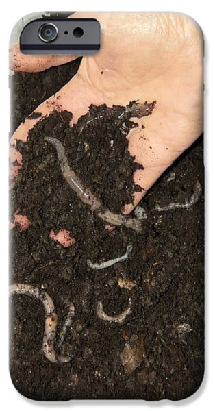 Earthworms In Soil iPhone Case by Sheila Terry