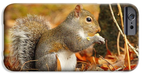 Bushy Tail iPhone Cases - Eastern Grey Squirrel iPhone Case by Andrew McInnes